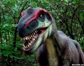 Wąskotorówka i dinozaury